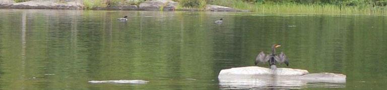 Notre lac
